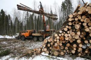 Бесплатный лес от государства на строительство дома: как получить, особенности, документы, законы