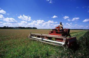 Грант на развитие сельского хозяйства в 2017-2018 году: как получить субсидии и государственную поддержку начинающему фермеру