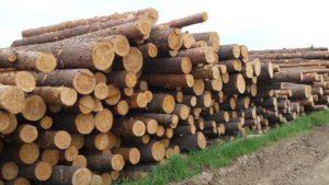 Как получить бесплатный лес от государства на строительство дома в 2020 году