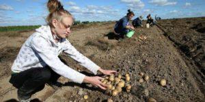 Изображение - Руководство, как получить бесплатно гектар земли на дальнем востоке Zemlya-300x150