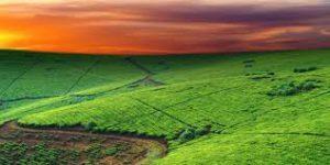 Изображение - Льготы по уплате земельного налога Bez-nazvaniya-19-300x150