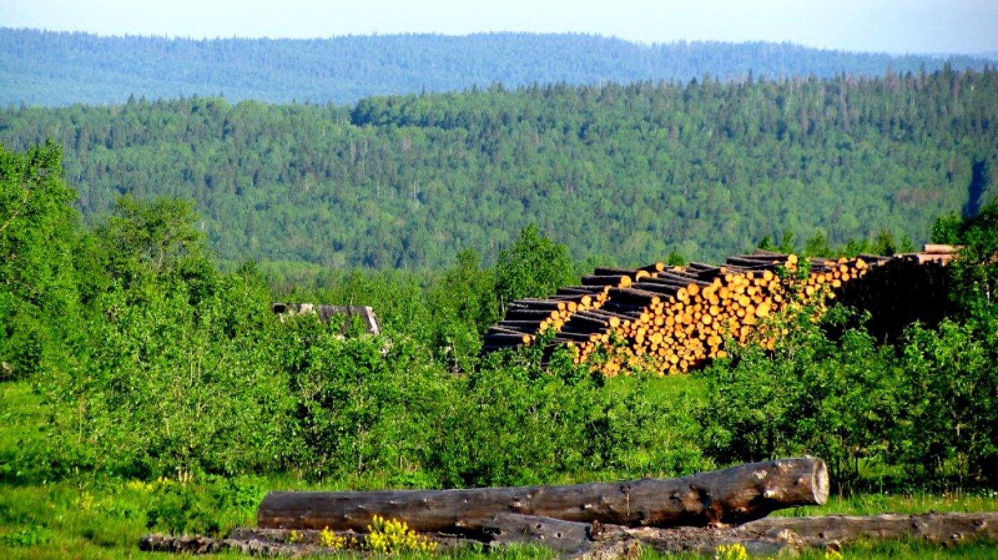 Как использовать лес прибыльно