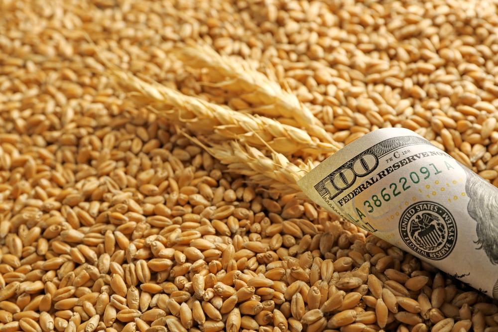 Мишустин утвердил новые порядки экспорта зерна