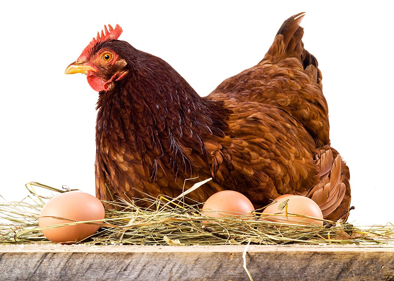 Когда подешевеют яйцо и птица