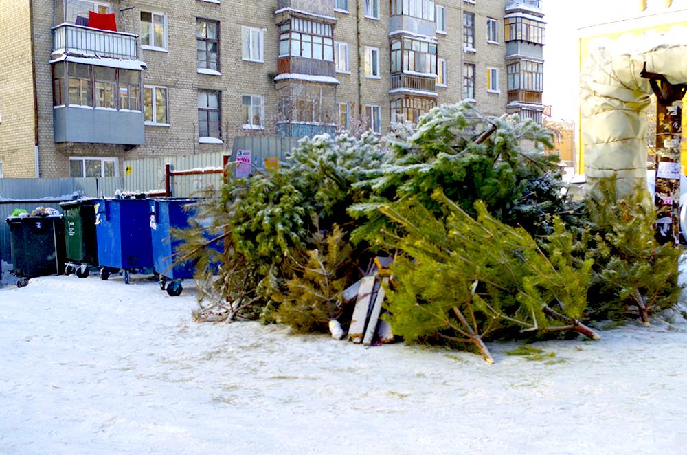 Куда в Москве деваются новогодние елки?