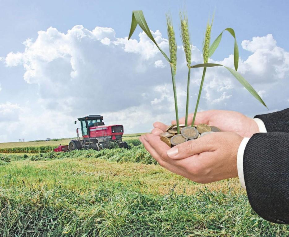 На Кубани увеличат финансирование растениеводства на 36%