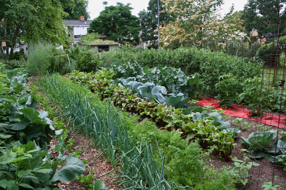 Российским дачникам может грозить большой штраф за разведение огорода