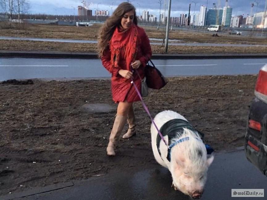 Если соседи завели свинью или павлина, можно ли на них пожаловаться и что за это грозит