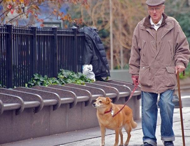 Пенсия по инвалидности и по старости: можно ли получать две пенсии одновременно