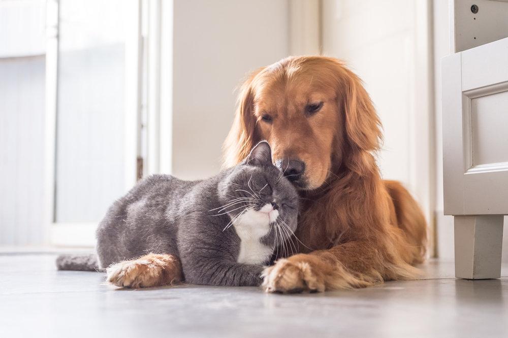Чипированию животных быть?