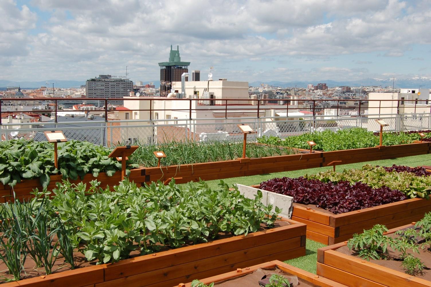 Городское садоводство и огородничество: Общественная палата РФ предложила разработку специальной программы для горожан