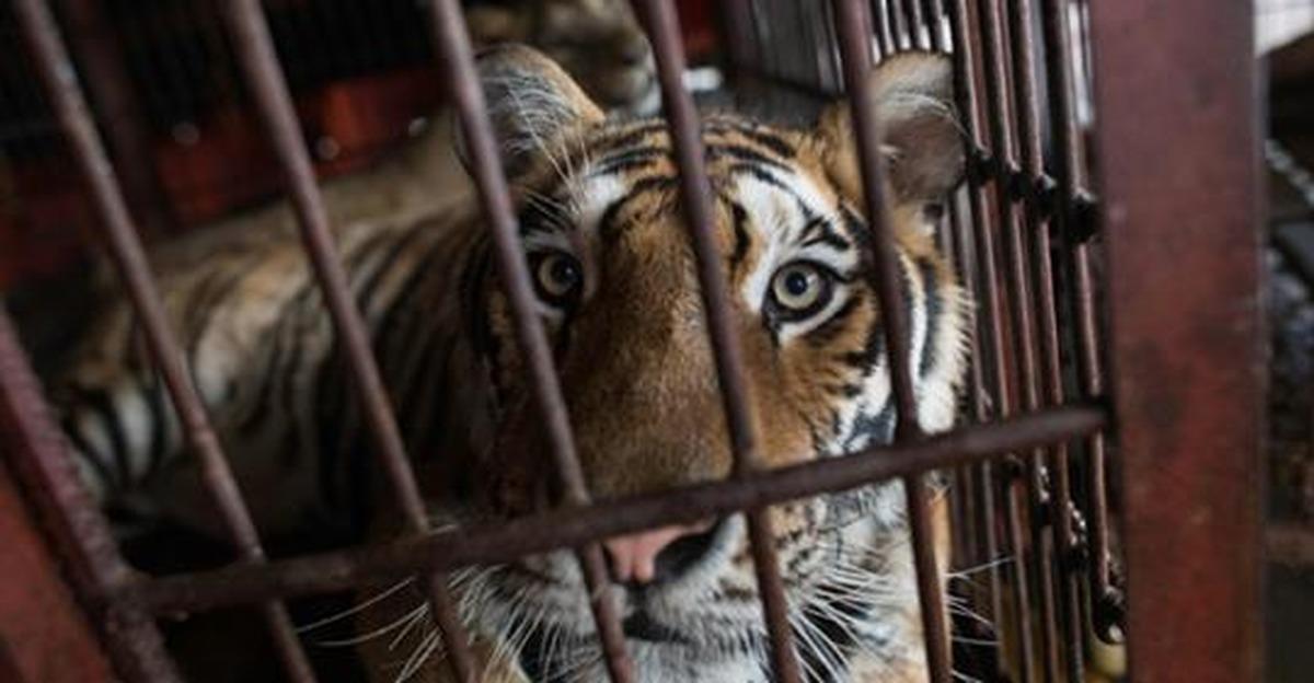 В России могут ввести новые штрафы за плохое обращение с животными