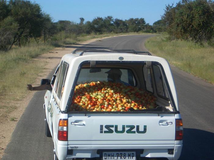 Неожиданные штрафы по дороге на дачу. Чего опасаться водителям?