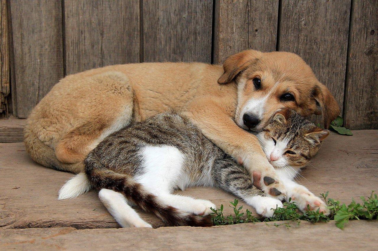 Президент подписал указ об учете домашних кошек и собак с 1 декабря 2021 года