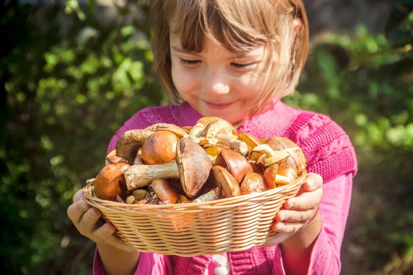 В России ужесточили правила сбора ягод, грибов и березового сока