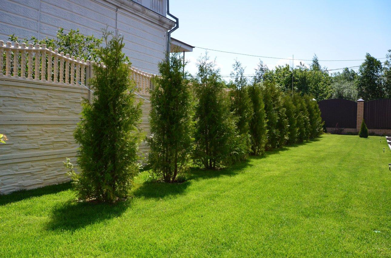 На каком расстоянии от забора можно сажать деревья: норма посадки по СНиП